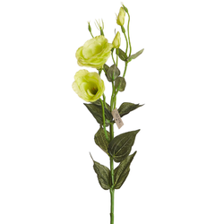 haste-lisiantus-x3-78cm-branca