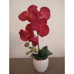 arranjo-orquidea-vermelha
