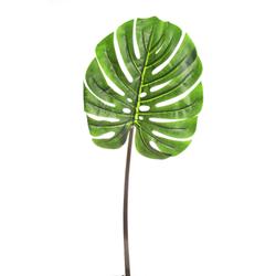 folha-costela-de-adao-60cm-toque-real