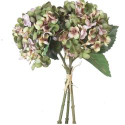 hortencia-bush-verde-antique