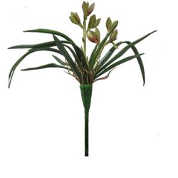 mini-orquidea-verde-spider